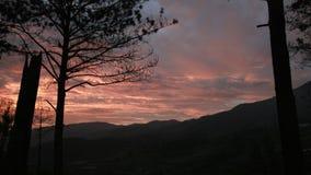 树剪影在日落的 图库摄影