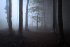 树剪影在有薄雾的黑暗的森林里 免版税库存照片