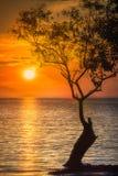 树剪影在水泰国海滩的 库存图片