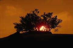 树剪影在沙漠 免版税库存图片