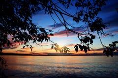 树剪影在湖的日落离开 免版税图库摄影