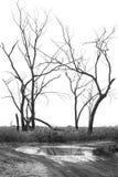 树剪影在白色的,最小,黑白 免版税库存图片