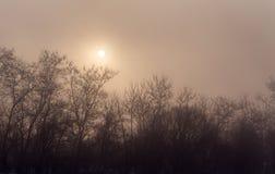 树剪影在雾的与后边太阳 库存图片