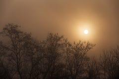 树剪影在雾的与后边太阳 免版税库存图片