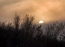 树剪影在雾的与后边太阳 库存照片