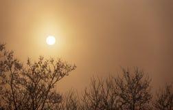 树剪影在雾的与后边太阳 图库摄影