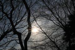 树剪影射击 免版税图库摄影