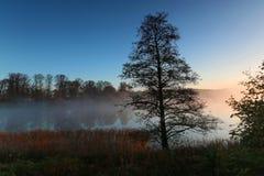树剪影每有雾的早晨 免版税库存图片