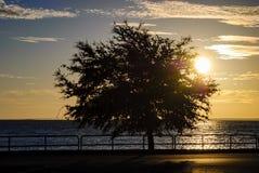 树剪影由岸的在日出 免版税库存图片