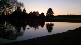 树剪影,反射在池塘,黄昏,鸭子 免版税库存照片