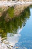 树剪影,反映在水 库存照片