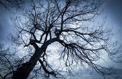 树剪影 库存图片