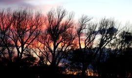 树剪影 库存照片