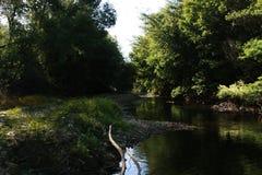 树包围的河 免版税库存图片