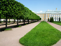 树包围的Petergof宫殿 库存照片