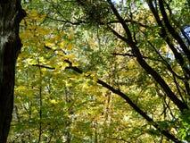 树厚实的冠  免版税图库摄影