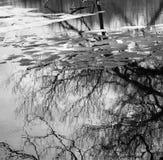 树反射和冰在湖在中央缅因 免版税库存照片