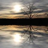 树反射在湖的,神秘的风景 免版税库存图片