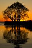 树反射日出 免版税库存图片