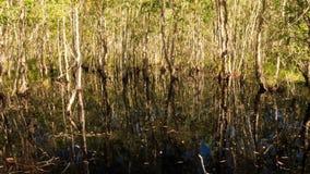 树反射看法在池塘大树的在银行 股票视频