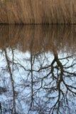 树反射 库存照片