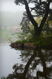 树反射 库存图片