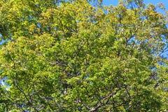 树叶子和分支 库存图片