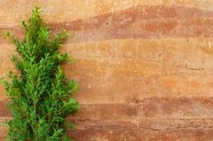 树叶子和被猛撞的地球墙壁 库存照片