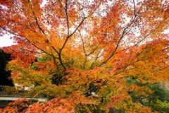 树叶子在公园在秋天 库存照片