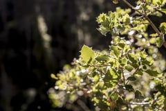 树叶子在森林的丛林的 免版税库存图片