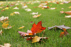树叶子在秋天 免版税库存照片