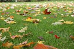 树叶子在秋天 库存图片