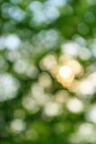 树叶子自然迷离bokeh加冠自白天 库存图片