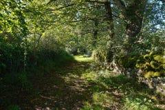树叶子遮蔽的法国农村小径 库存照片
