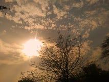 树叶子,日落 免版税库存图片