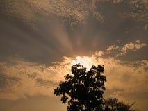 树叶子,日落 免版税图库摄影