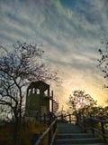 树叶子,日落 库存图片