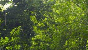 树叶子-在一个晴朗的夏日 股票录像