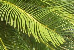树叶子 图库摄影