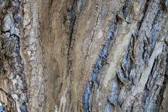 树吠声与不同颜色的 免版税图库摄影