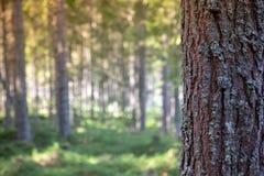 树吠声在正文消息的森林里 库存照片