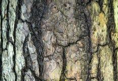 树吠声背景纹理 免版税库存照片