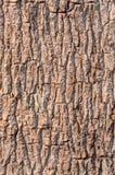 树吠声  图库摄影