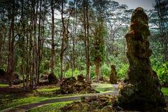 树和…熔岩 库存照片