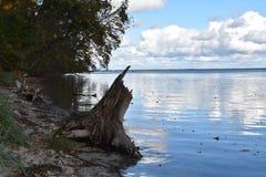 树和一个巨大的死的树桩在海滩离开 叶子在水中 苹果覆盖花横向草甸本质星期日结构树 免版税库存照片