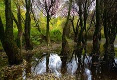 树和一个水坑在Izmaylovsky公园 免版税库存图片