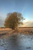 树和一个冻水坑 库存图片