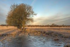 树和一个冻水坑 免版税库存照片