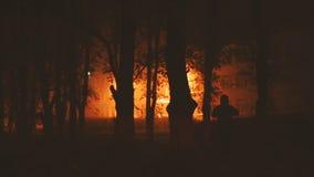 树和一名修士的剪影在公园 股票视频