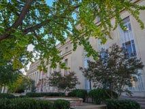 树和一座白色办公楼 免版税库存照片